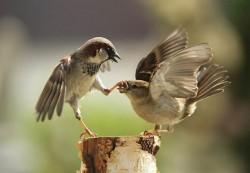 птицы, пасть