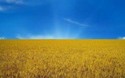 В чем особенность украинской ситуации?